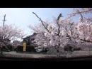 ~ここにしか咲かない花~ LOVERS ROCREW