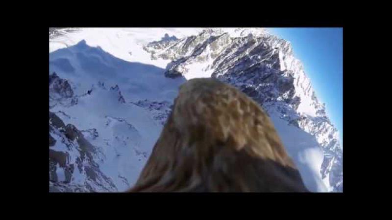 Полет Орла - Уникальное Видео