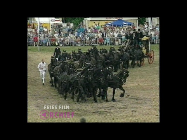 40 Friesian horses, 1 stagecoach / 40 Friese paarden, 1 koets