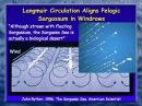 Secrets of the Sargasso Sea