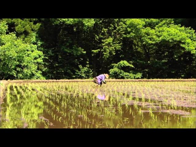 Дикая природа Японии -2 - YouTube