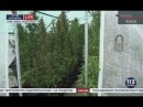 Плантацию конопли на острове посреди Днепра обнаружили полицейские