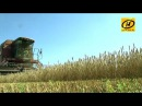 Беларусь рассчитывает собрать около десяти миллионов тонн зерновых