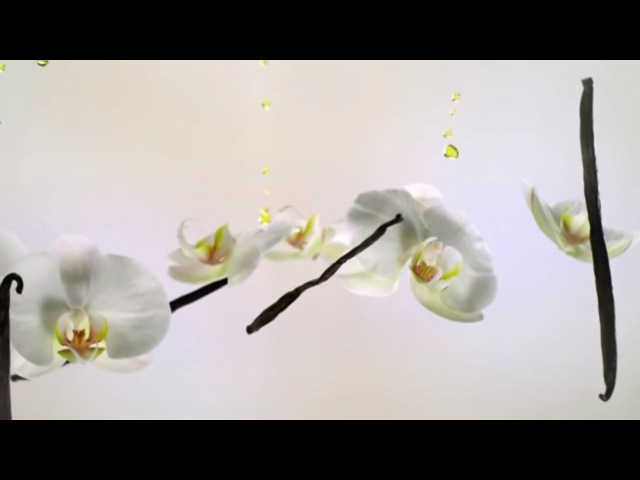 Petali di Vaniglia, scopri la Linea novità della primavera 2016