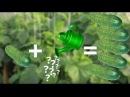 Как Увеличить Урожай Огурцов Чем Подкормить Огурцы