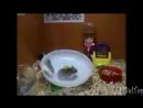 смешное видео про животных прикол до слез ржу