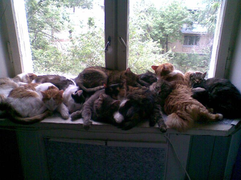 Томич через суд заставил мать убрать из квартиры десятки кошек и собак