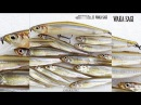 GEKIASAII ALIVE ROLLER ゲキアサ2 アライブローラー の水中映像を公開 イマカツ