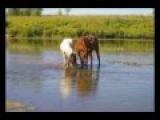 Валерий Золотухин - Ходят кони над рекою