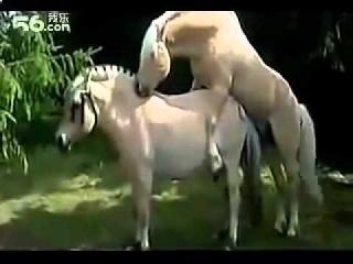 Лошадиный секс смотреть