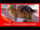 ★ ХХХ кошка и собака СЕКС! Пес трахает котэ - животный секс. Ржач!