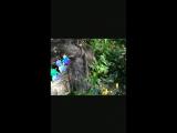 Приключения Зомбика и Стива в ботаническом саду).mp4