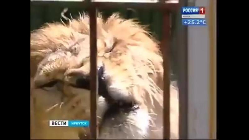 Синоптики: 23 июня ожидается самый жаркий день мес... Погода в городах России 23.06.2017