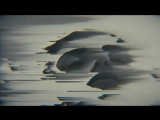Ensemble Economique - On the Sand (feat. Peter Broderick) (official video)