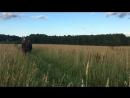 Галоп в полях
