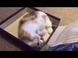 Надеюсь,что эти звуки издает кот...