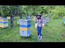 Пасека, пчёлы и мёд