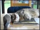 Dove Ruins Cat Nap_360p.flv