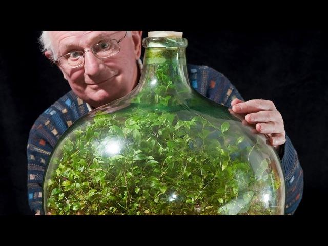 Британец выращивает растение в чудо бутылке