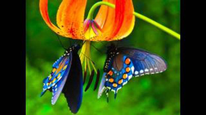 Crazy Town Butterfly (Dj Vogzol remix)