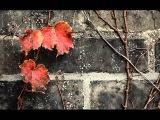 Laura Fygi - Autumn Leaves