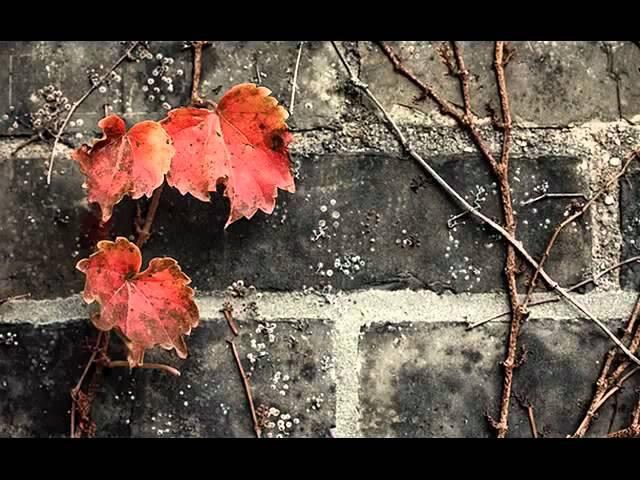 Laura Fygi - Autumn Leaves