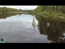 Рыбалка в Карелии- Мега ерш на р Свят -17 09 2017 -Часть -2