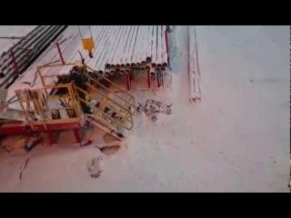 Белый медведь гоняется за нефтяниками на Ямале