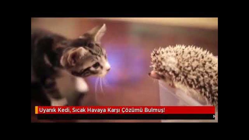 Uyanık Kedi Sıcak Havaya Karşı Çözümü Bulmuş!