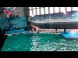 Шоу в Санкт-Петербургском дельфинарии на Крестовском окончание