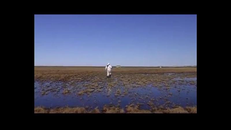Охота на гусей в Заполярье, Россия (RUS)