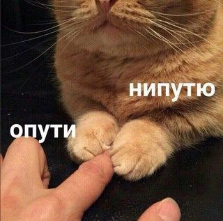 Кот опути непутю