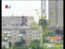 Удар молнии унес жизнь ребенка Несчастный случай произошел в деревне Крылосово