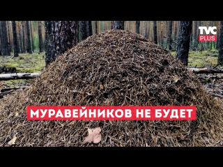 Муравейников не будет