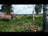 Нейромонах Феофан - Лесные забавы (фан-клип)