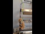 казнь медведя