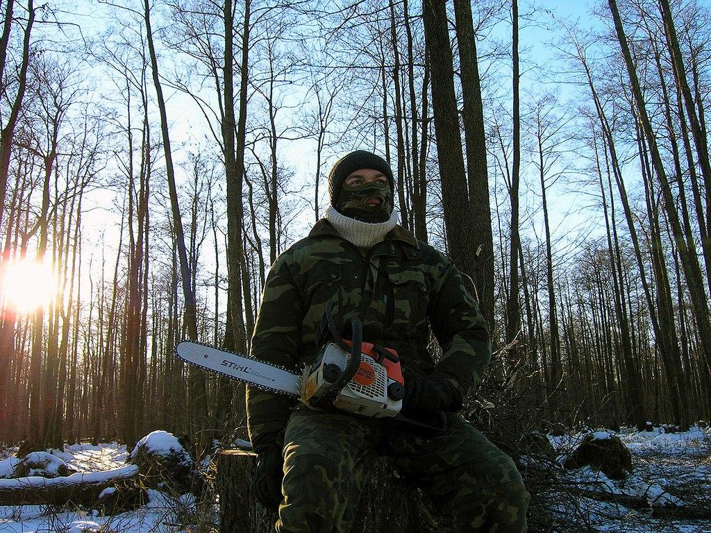 «Черные лесорубы» нанесли серьезный ущерб лесам Зеленчукского района