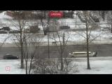 Полицейские и прохожие устроили погоню за оленем в Петербурге