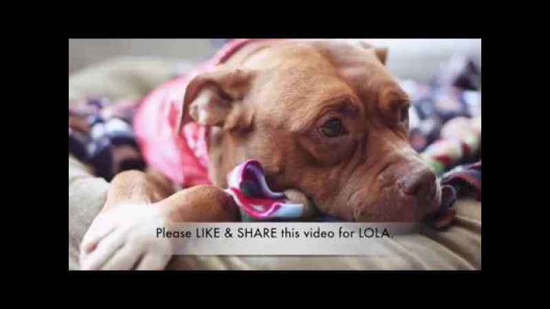 After 8 years of neglect, Lola the pitbull is ready for her forever home