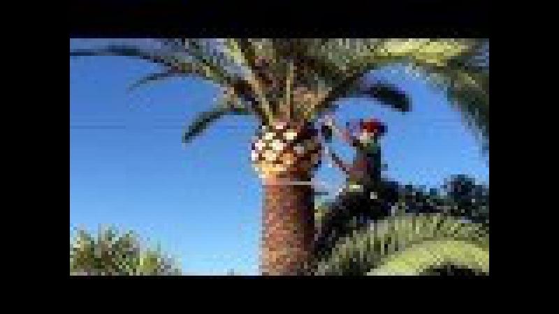 Palm tree. Poda 634335554 Jhon javea, Moraira, calpe, etc