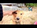 Самый милый щенок летит в Москву Нашли семью бездомной собаке