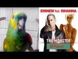 Попугай поет Эминема и Рианну Parrot sings Eminem and Rihanna