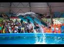 Дельфинарий в Джубге 2016 год...