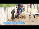 Cães de moradora de rua atacam moradores da região de São Mateus (SP)