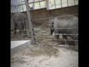 Портланд Зоопарк
