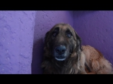 Собака не знает, как реагировать на доброту и ласку