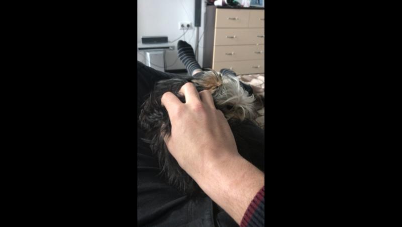 Зверь а не собака