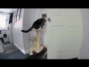 это ЧУДО смешные и прикольные видео про дружбу животных