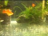 SDC14814 аквариум