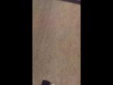 Света Котик - Live